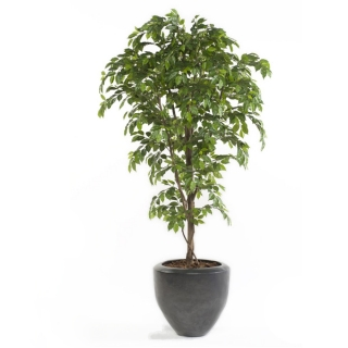Árbol Ficus PREMIUM, artificial de 145 cm, para interior